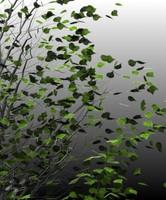 birch trees 3d max