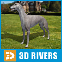 3ds max greyhound dogs
