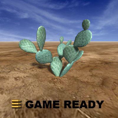 cactus5_a.jpg