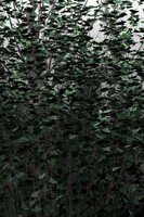 poplar trees 3d model