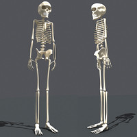 3ds human skeleton