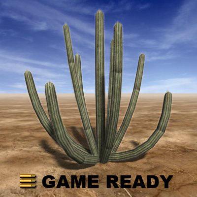 cactus6_a.jpg