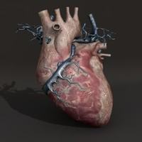 Heart_out.c4d.zip