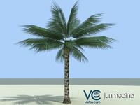 maya palm tree