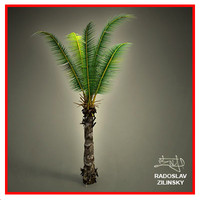 young palm realistic 3d max