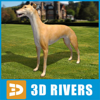 greyhound dogs 3d model