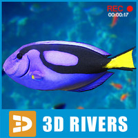 Blue tang by 3DRivers