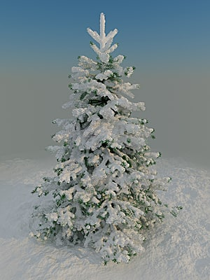 Fir_under_snow_400_01.png