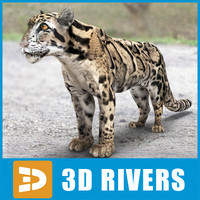 Clouded leopard by 3DRivers