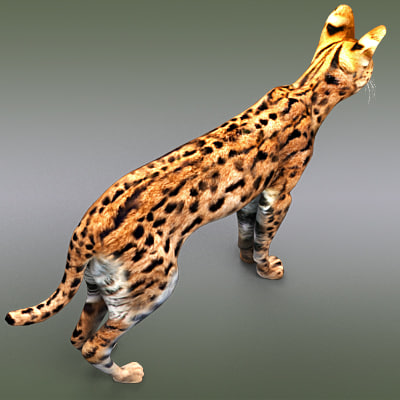 3d model serval cats - Serval by 3DRivers... by 3DRivers