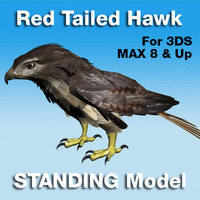 Red Tailed Hawk Standing Model (not rigged) for 3DS Max v8