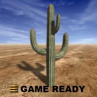 large saguaro cactus max