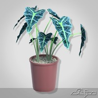 alocasia houseplant 3ds