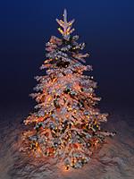 maya christmas fir