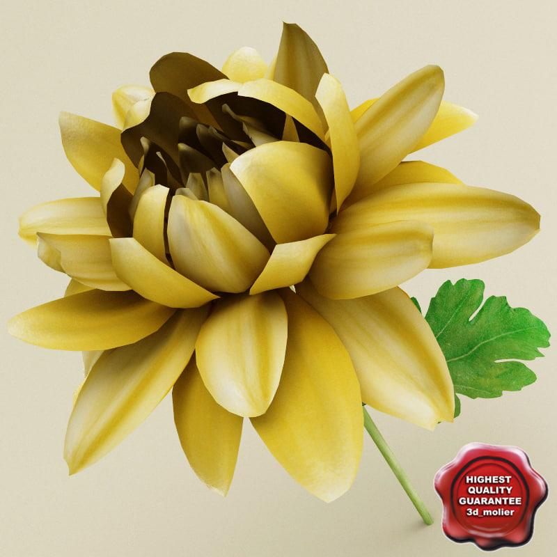 Chrysanthemum_0.jpg