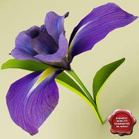 3d model iris modelled
