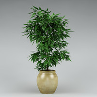 3dsmax plant flowerpot realistic
