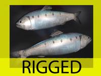 herring 3d model