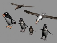 Antarctic Wildlife Collection (Penguins, chicks, albatross)