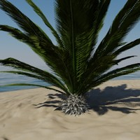 yucca palm tree 3d model