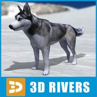 Husky by 3DRivers