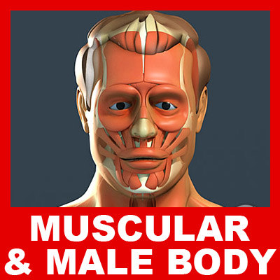 Male_Body_and_Muscles_Small.jpg