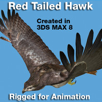 3d red tailed hawk rigged model