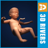Fetus by 3DRivers