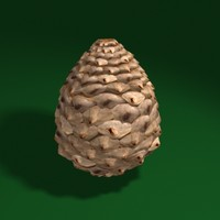 max pine cone