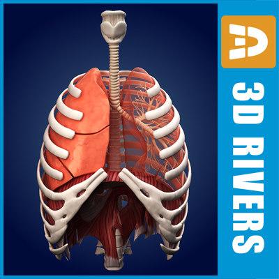 Lungs_02_Logo.jpg