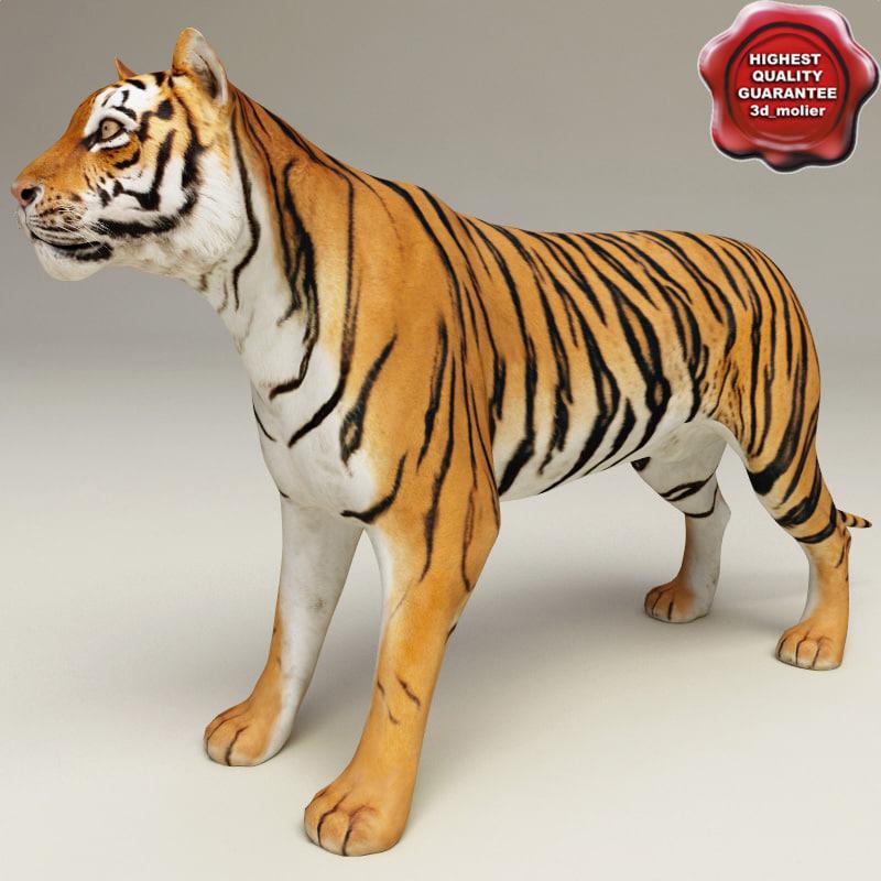 Tiger_00.jpg