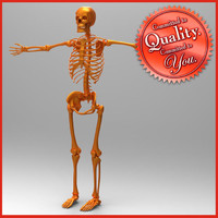 obj human skeleton
