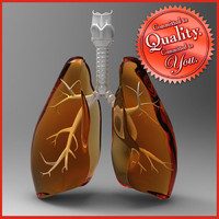 human lungs 3d model