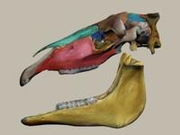 max horse skull