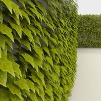 greenscreen vine leaves max