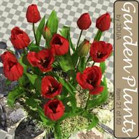 021_tulips