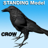 Crow Standing Model (not rigged)