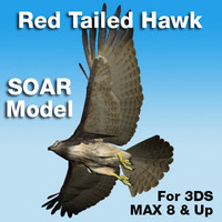 3ds max red tailed hawk soaring