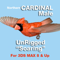 Cardinal in soaring position
