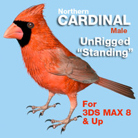 Cardinal - Male - Standing Wings Folded