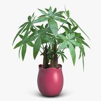 Fatsia House Plant in Vase