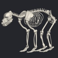 bear skeleton max