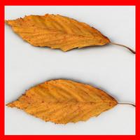 maya fallen leaf