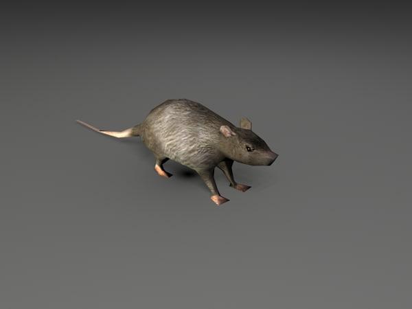 rat01.jpg