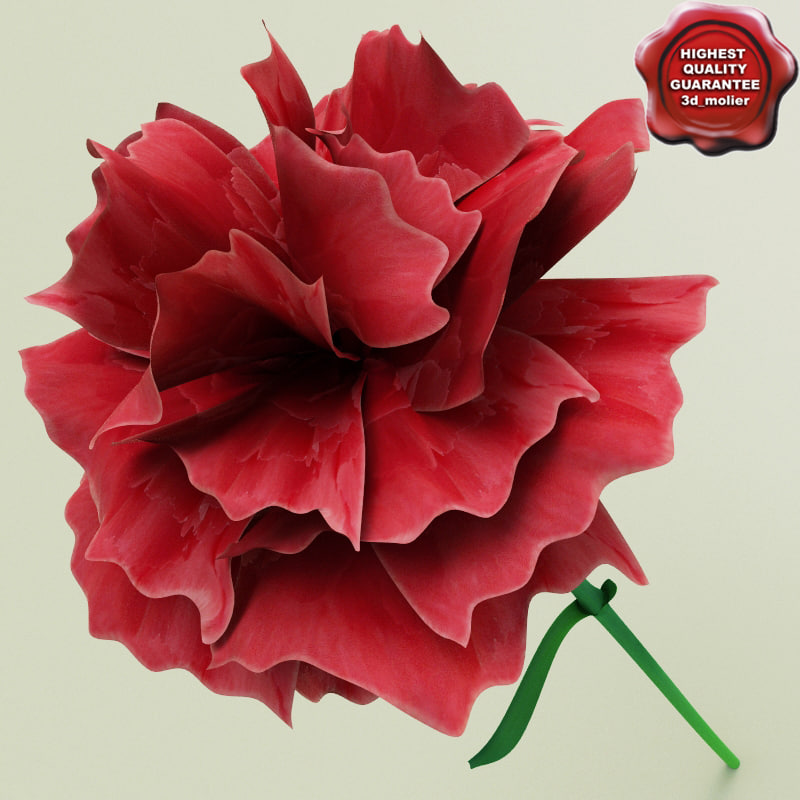 Carnation_0.jpg