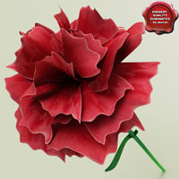 3d carnation modelled model