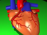 human heart 3d max