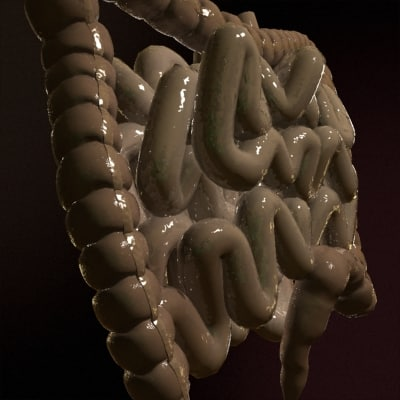 3d model realistic colon - Colon... by xen32