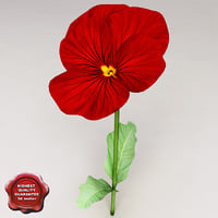 3d pansy red model