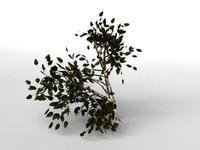birsch tree 3d model